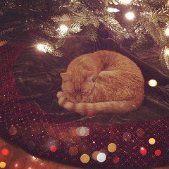 Not a creature was stirring, not even a... cat?