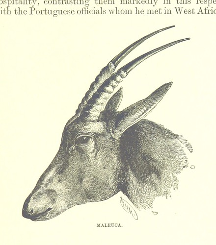 Image taken from page 579 of 'Great Explorers of Africa. With illustrations and map'