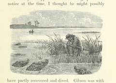 "British Library digitised image from page 45 of ""African Hunting from Natal to the Zambesi including Lake Ngami, the Kalahari Desert, &c. from 1852 to 1860 ... With illustrations [including a portrait] by James Wolf and J. B. Zwecker"""