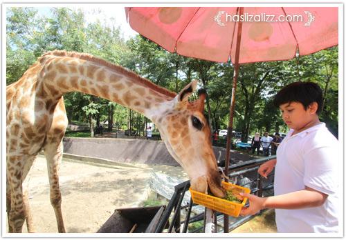11713420783 570eac5459 o BERCUTI DI HATYAI THAILAND PART 6   songkhla Zoo