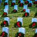 Arlington National Cemetary with Christmas Wreaths at Sunset - Arlington VA