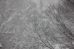branch, winter, snow, rain and snow mixed, ice, frost, monochrome, winter storm, blizzard, black-and-white, freezing,