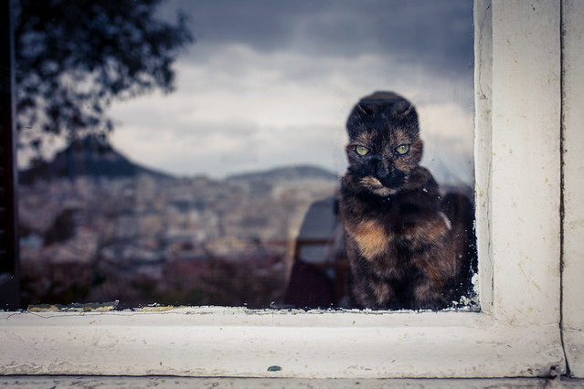 40 Fierce Photos Featuring Felines - Cat Street Photography - A cat's portrait and somehow a self portrait