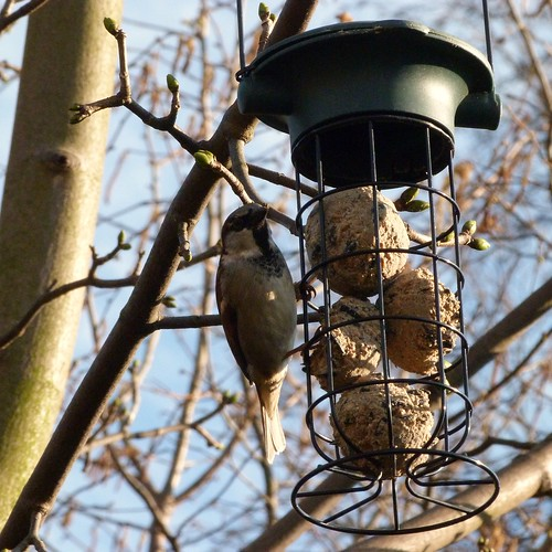 a bird feeding from a hanging feeder