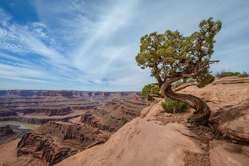 The Tree [Explored]