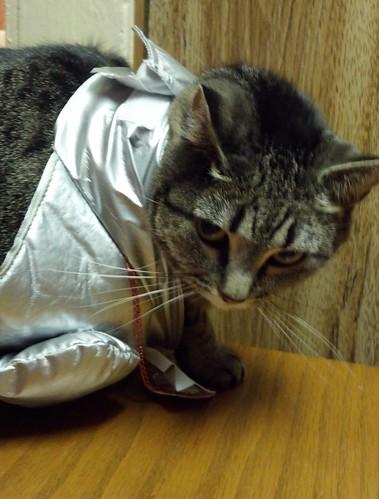 Sylvie-costume