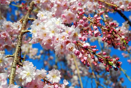 Inuyama Spring 2014 090r