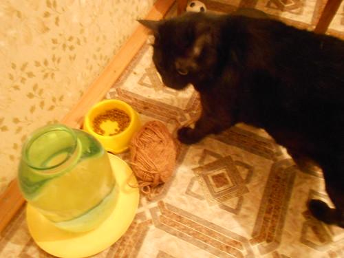 кот принес моток к тарелке