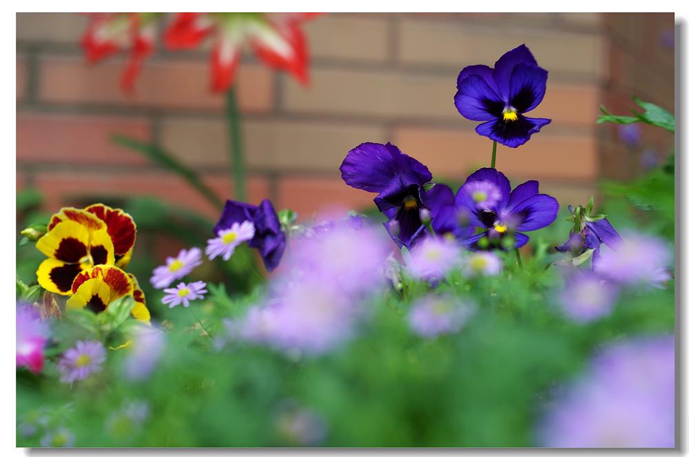 我的。小花園
