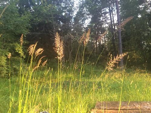 sunset summer holiday grass taichi svartbäcken rimbo keibr svartbacken