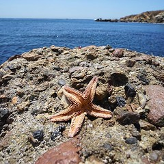sand(0.0), tide pool(0.0), animal(1.0), sea(1.0), marine biology(1.0), invertebrate(1.0), marine invertebrates(1.0), fauna(1.0), natural environment(1.0), shore(1.0), coast(1.0), starfish(1.0), rock(1.0),
