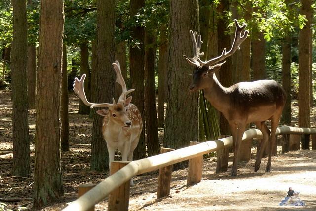 Tierpark Perleberg 09.08.2015 15