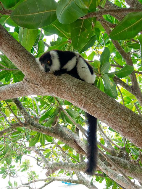 Madagascar6 - 024