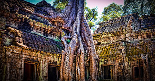 Image of Angkor Wat near Siem Reap. ankorarchaeologicalpark ankorwat cambodia decay hdr holidays mangojouneys photomatix roots topazlabs trees