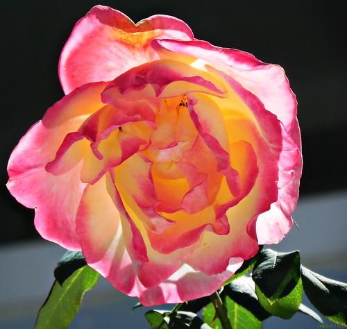 a flor silenciosa de mil e uma pétalas concêntricas by Odete de Paula