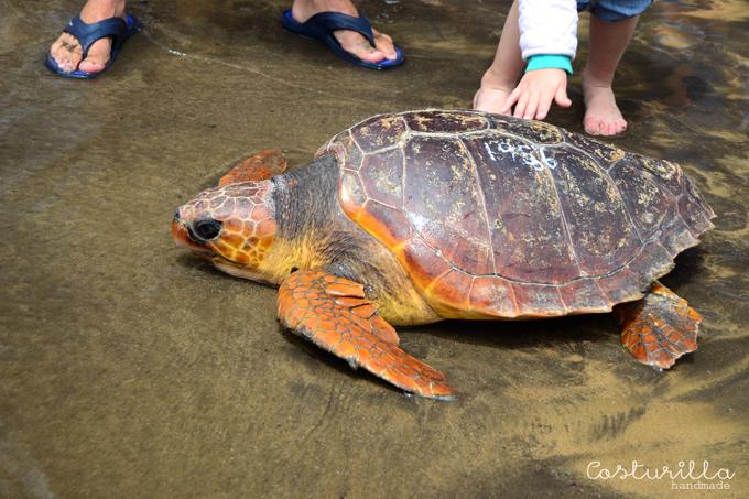 Tortugas recuperdas
