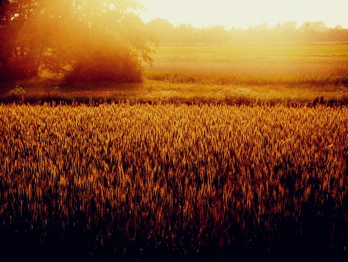 sunset summer color field landscape gold corn europe moody meadow poland 2013