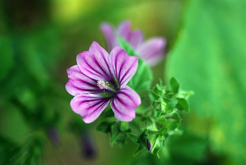 Floror silvestre