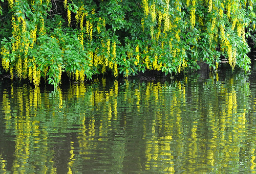 uk summer england home reflections canal nikon lancashire laburnum burnley leedsliverpoolcanal d90 2013 nikond90 myfreecopyright swjuk jun2013