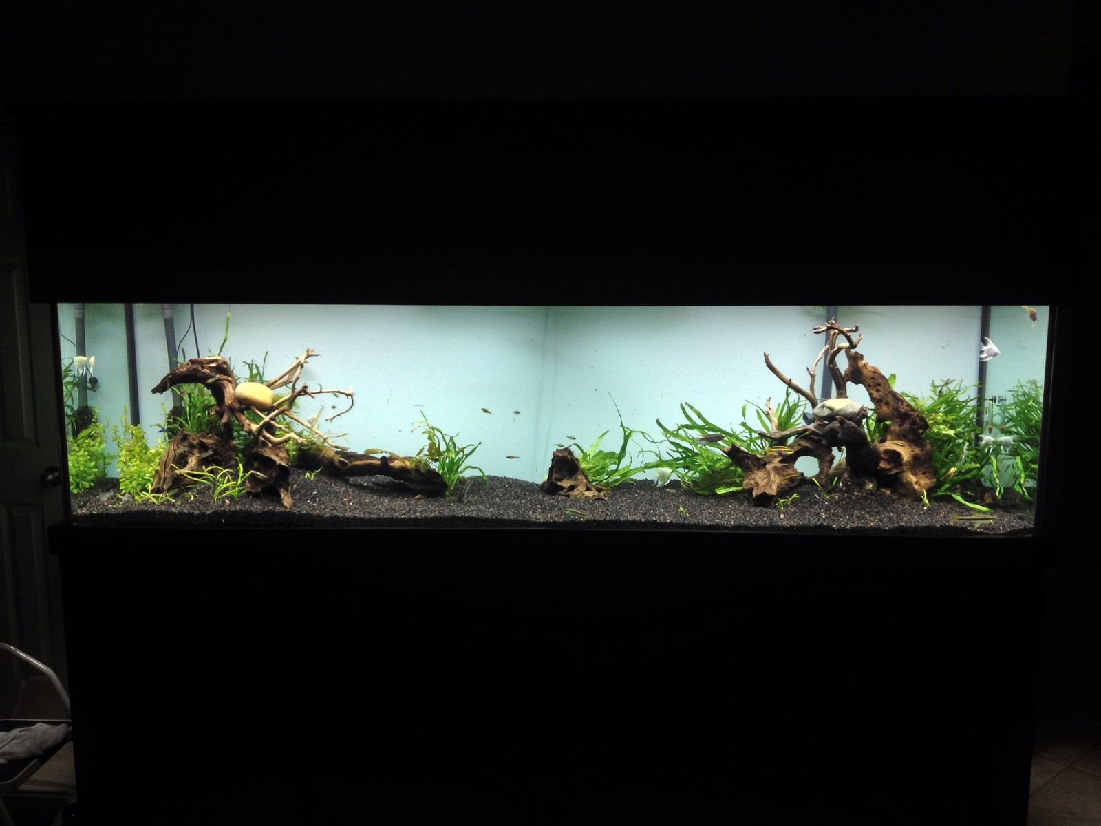 New house new tank 240 gallon adventure Page 2 The Planted