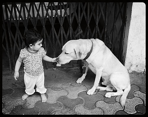 Healing A Dog By Touch by firoze shakir photographerno1
