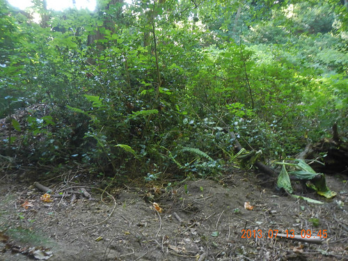 Holly thicket Before