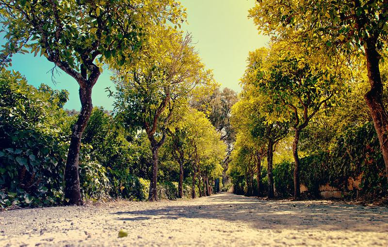 Buskett Gardens in HDR - Malta