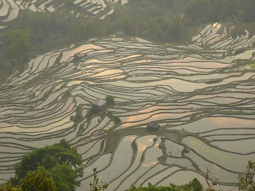 Yunnan13-Yuanyang 24-Bada (20)