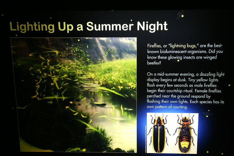 Glow Exhibit: Lighting Up a Summer Night