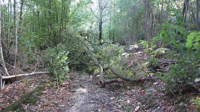 IMG_4456 St Jude storm damage 2013