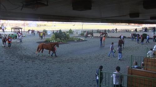 Paddock Shot Before Race 6--The Last Live Race In Front Of The Original #Meadowlands Grandstand