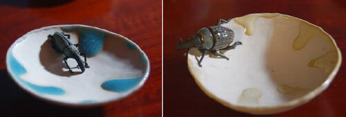 お皿に昆虫