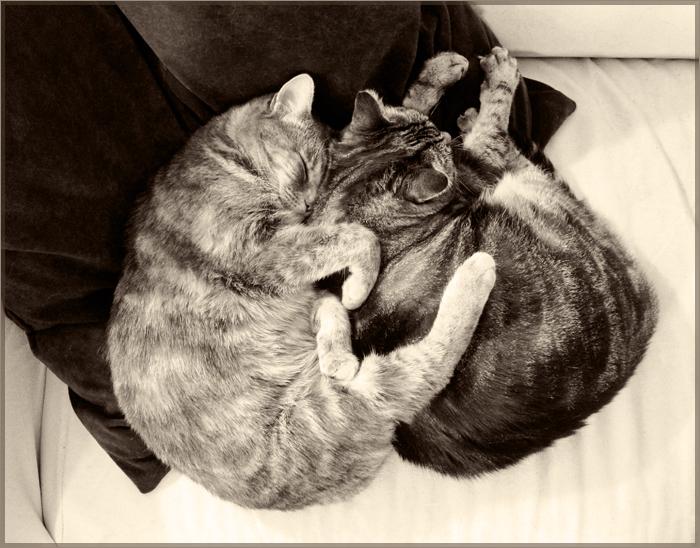 kittiesBW
