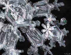 Snowflake Menagerie
