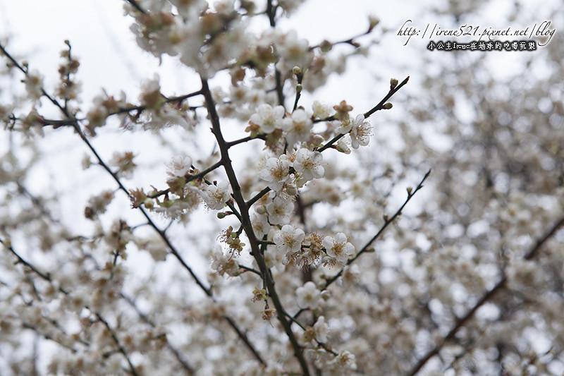 14.01.12-志成公園