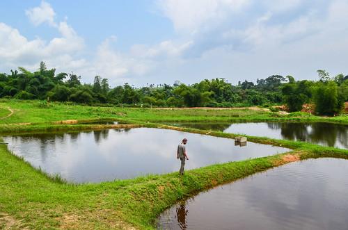 Pisciculture in Congo