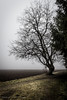 """""""The hanging tree"""" - Arena / BurgerFM (My favourite music in pictures) by Burgerspace"""