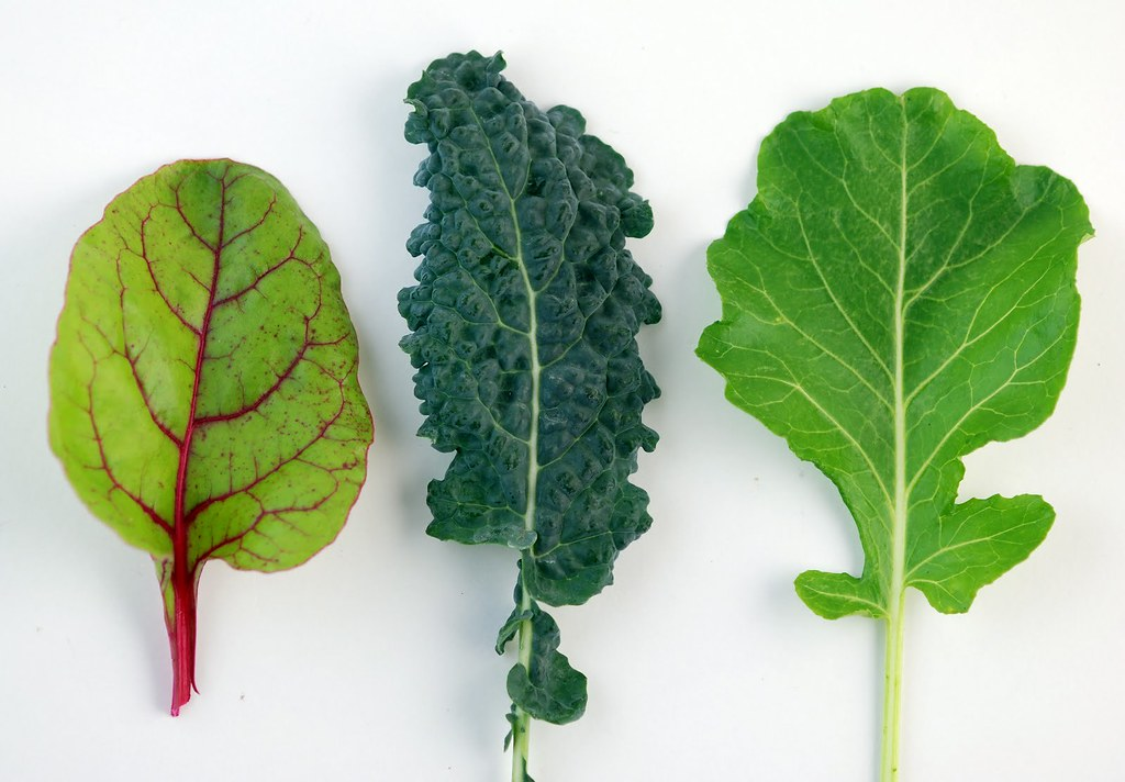 Winter-Greens-Swiss-Chard-Kale-Collards