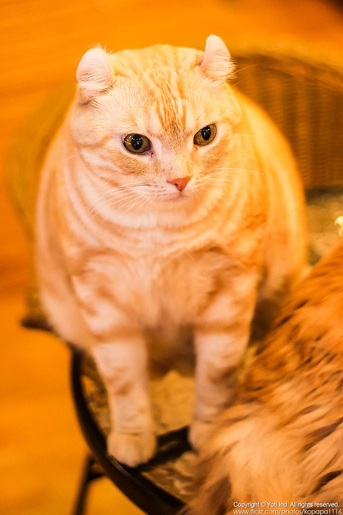 元氣貓主題餐廳 IMG_6139