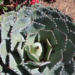 Plant of Balboa Park