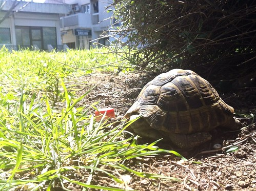 Tortoise in the bushes