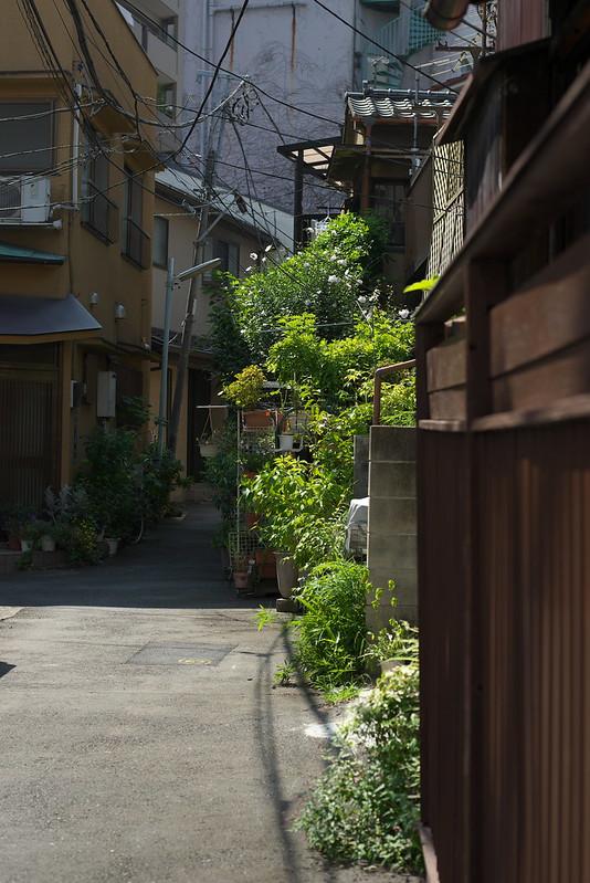 東京路地裏散歩 入谷 2015年7月20日