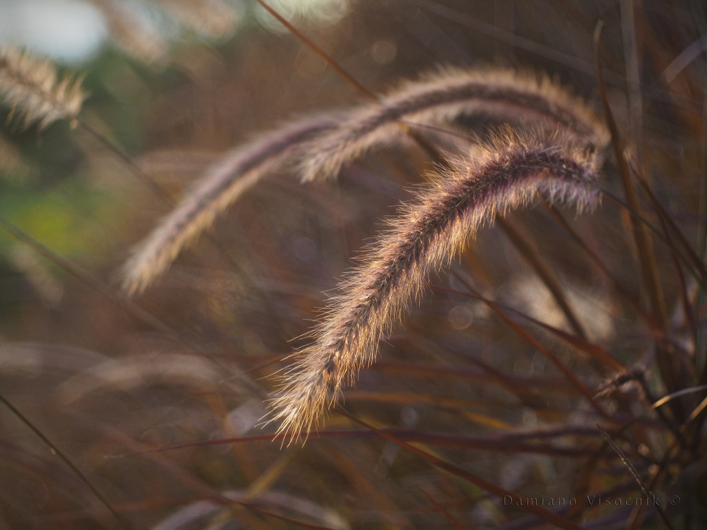 Winter grass_9_c