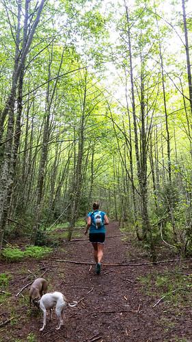 Running through the alder grove