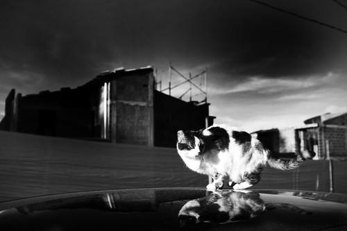 Astrid by Byron Alaff Vélez