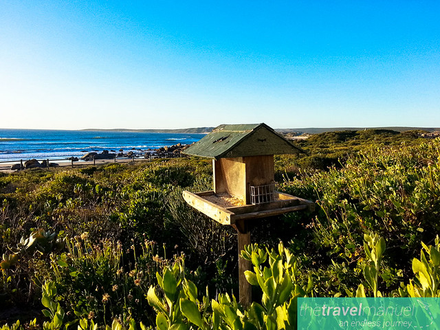 West Coast National Park and Jacobsbaai 2013-4