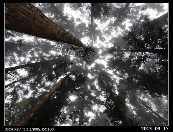 20130915_Trees