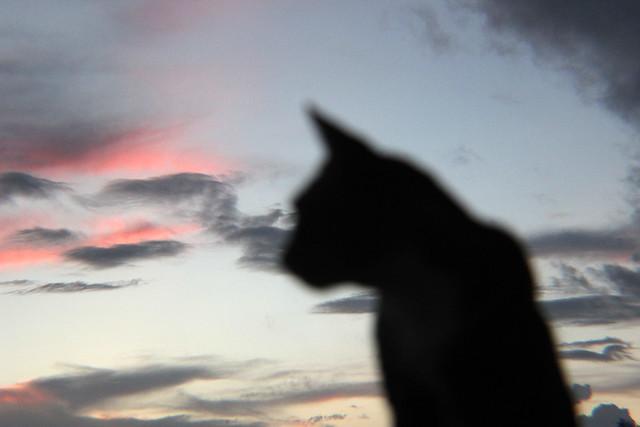 cats flickr   photo sharing