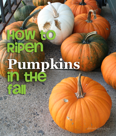 How to Ripen Pumpkins Off the Vine in the Fall