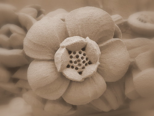 Flower from carved limestone swag by stephencritchley
